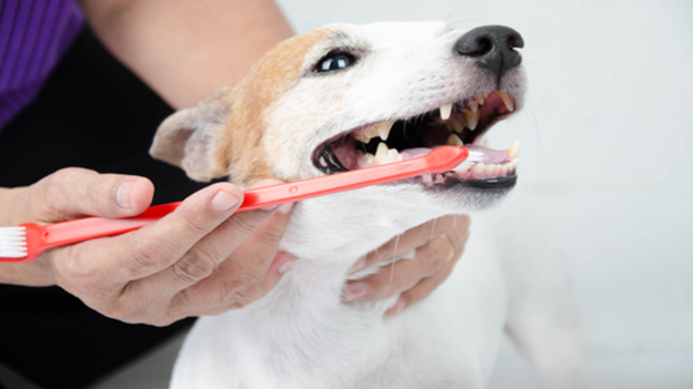 dog dental hygiene tips from Commencement Bay Animal Hospital in tacoma wa