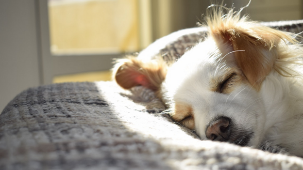 whawhat to do if dog has heatstroke